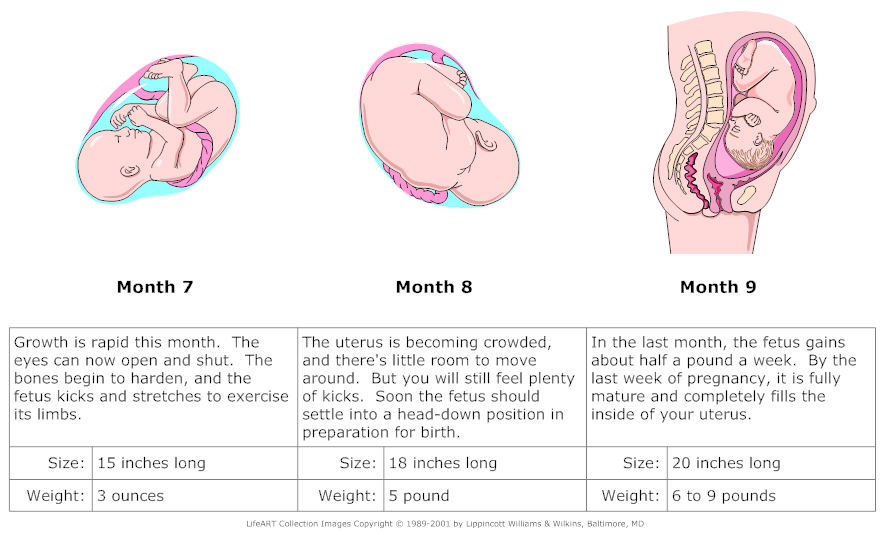 Pregnancy exercise 3rd trimester